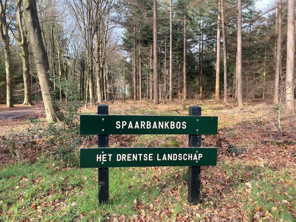 Het Spaarbankbos bij Hoogeveen