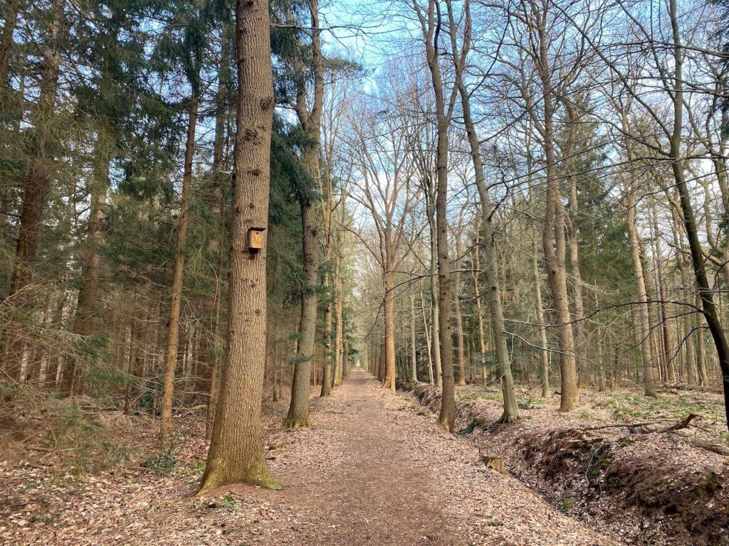Wandelen door het Spaarbankbos bij Hoogeveen