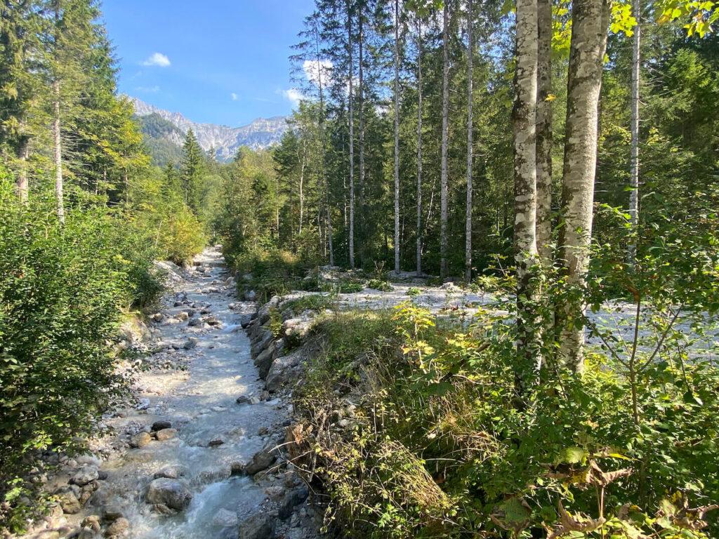 Berkenbos in Oostenrijk
