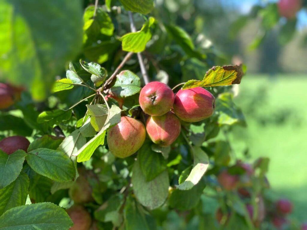 Tussen de appelbomen