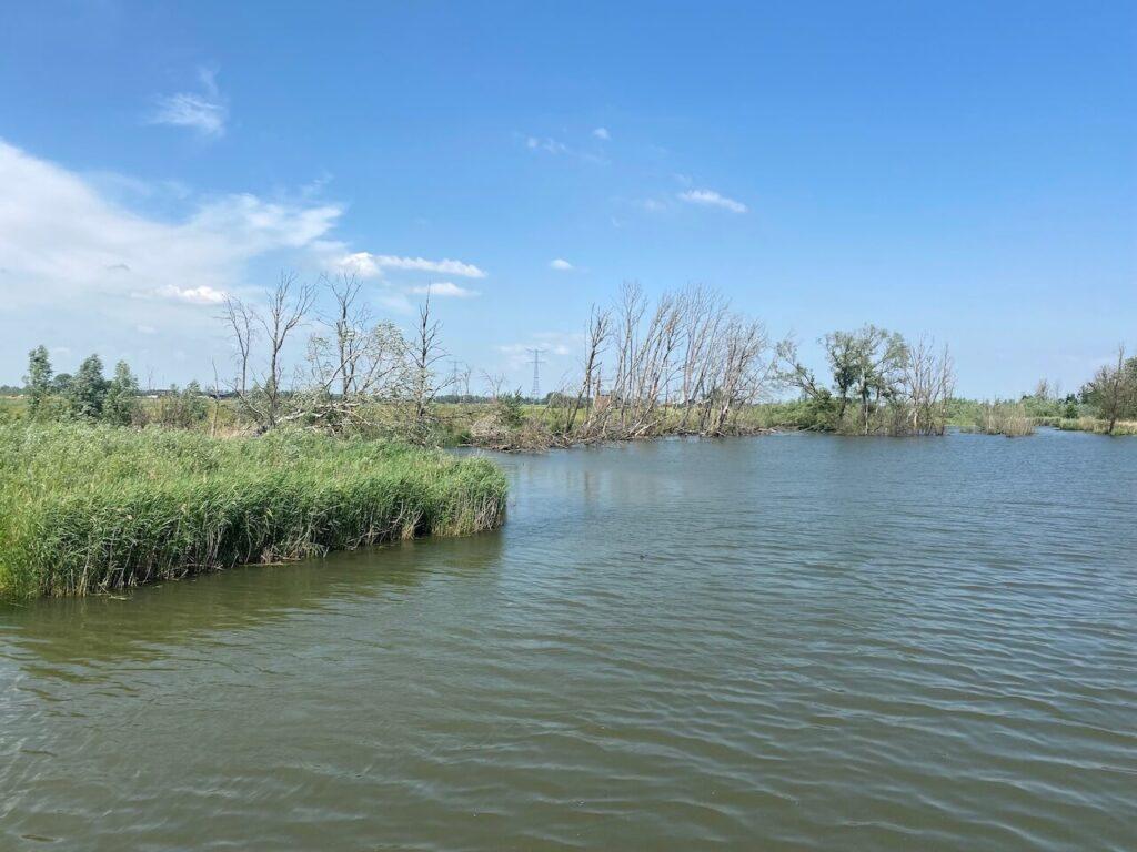Fietsen door de Biesbosch