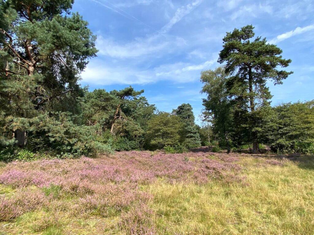 Heideveld op Heidestein en Landgoed Bornia