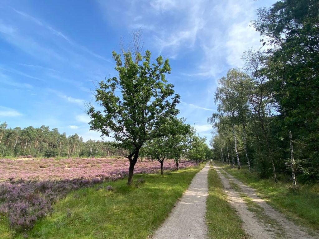 Fietspaden Kozakkenput Zeist heide Utrechtse Heuvelrug