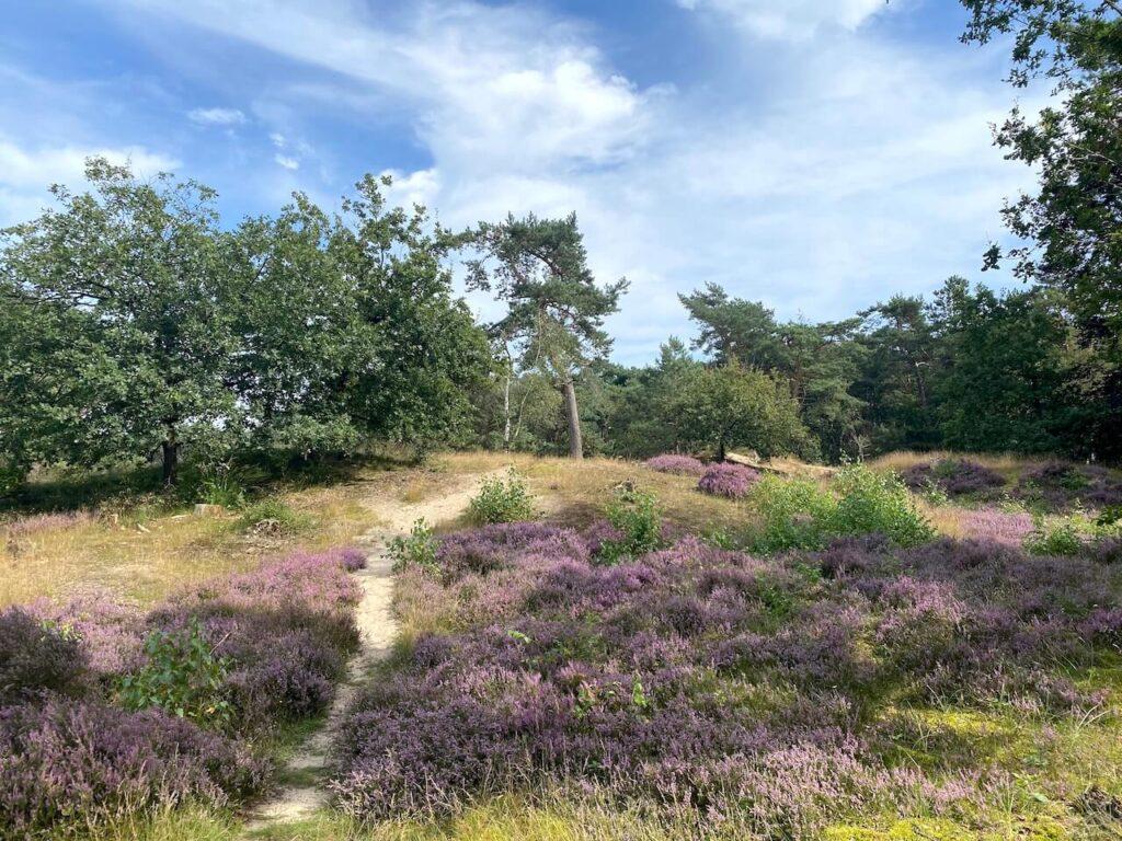 Heide Soesterduinen wandelroute