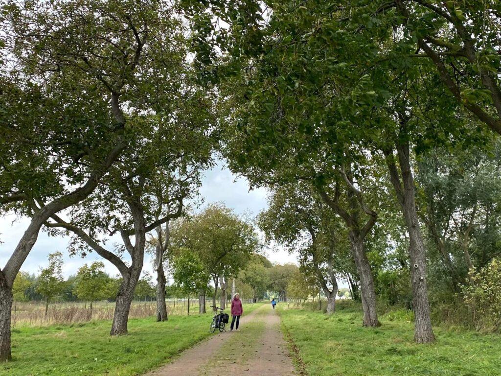 Tamme kastanjes zoeken in Park Lingezegen
